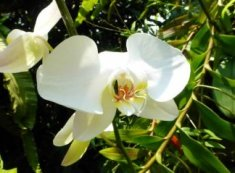 white orchid flower for grief