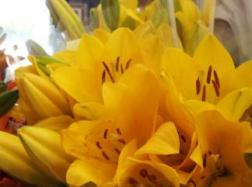 Yellow Lilies,signifying grief