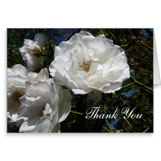 Thank You Card with White Roses