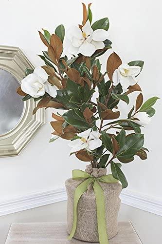 Magnolia Memorial Tree from The Magnolia Company