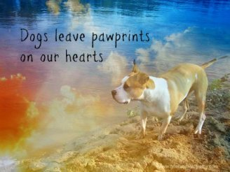 Pet loss greeting card - Dogs Leave pawprints on our hearts