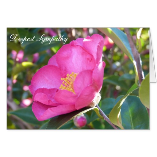 Deepest Sympathy Card with Pink Flower