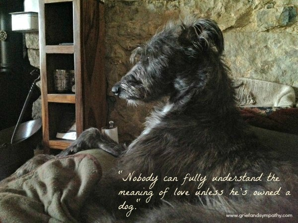 Dog Greeting Card - Nobody can fully understand the meaning of love unless he's owned a dog
