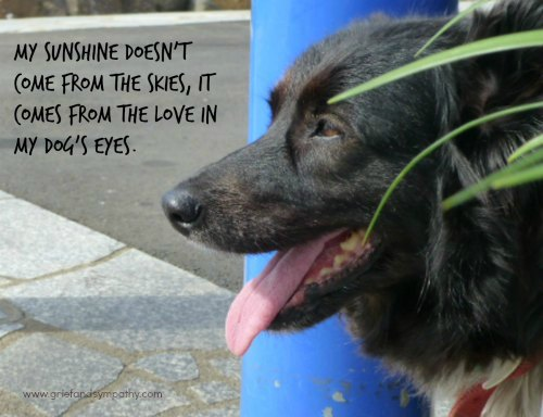 Black Dog with Quote