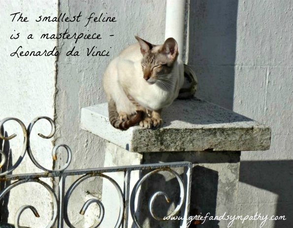 The smallest feline is a masterpiece.  Greeting card