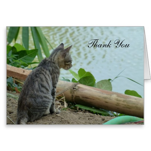 Thank You Note with Kitten Looking at a Lake