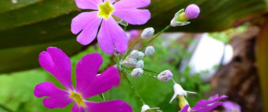 Purple flowers.  Nature's consolation for loneliness.