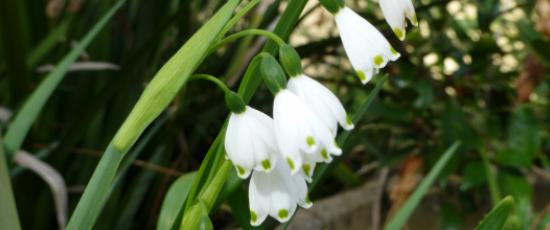 White snowdrops for the winter of life in the final stages of Alzheimer's disease
