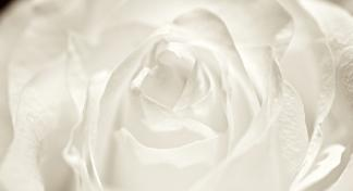white flower for comfort in grief