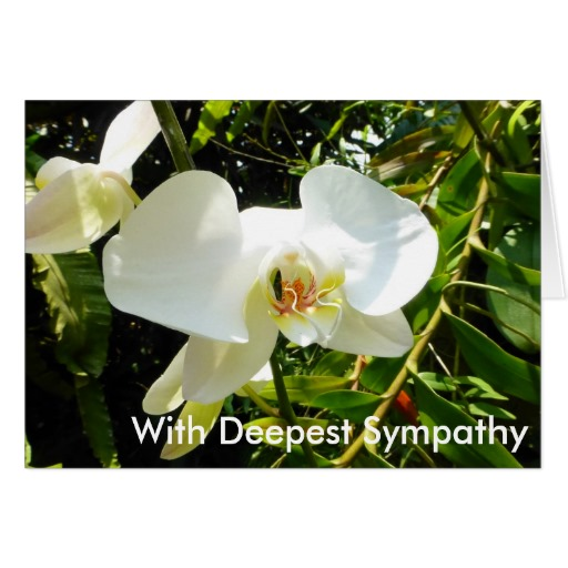 cream orchid with deepest sympathy card - Bulk Sympathy Cards