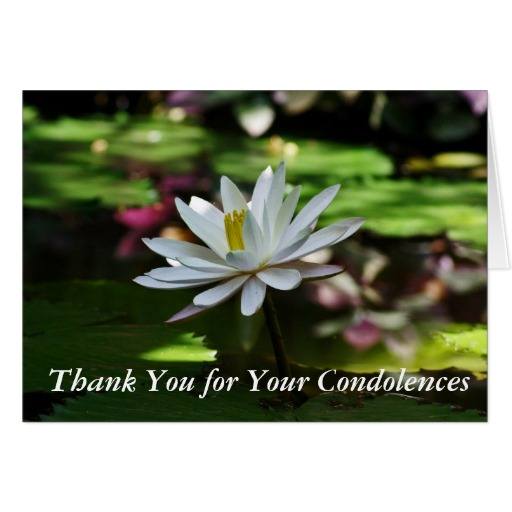 Waterlily Card - Thank you for your Condolences