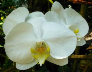 White and yellow orchid for a death
