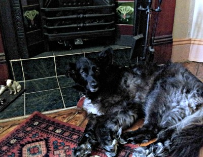 black dog beside fireplace to alleviate widower grief