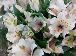White Alstroemeria for a cremation