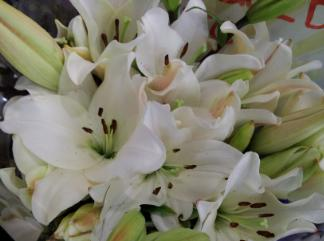 white lilies for grief