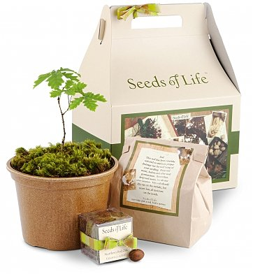 Seeds of Life Oak Tree Kit