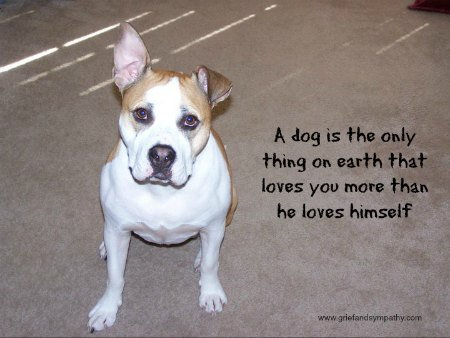 Staffie type dog with quote