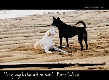 A Dog Wags His Tail with his Heart - Card with Bali Dogs