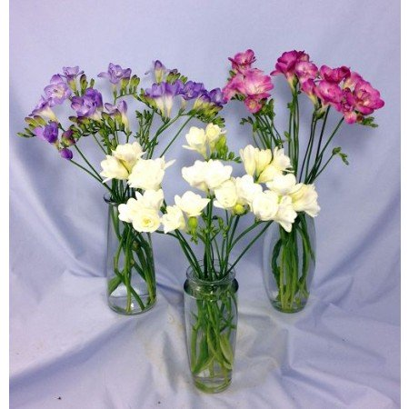 Freesias for sympathy flowers