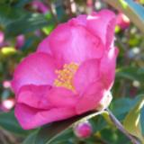 pink flower to cheer those grieving
