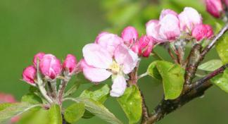 Pink cherry blossom - a sign that life goes on after the loss of a baby
