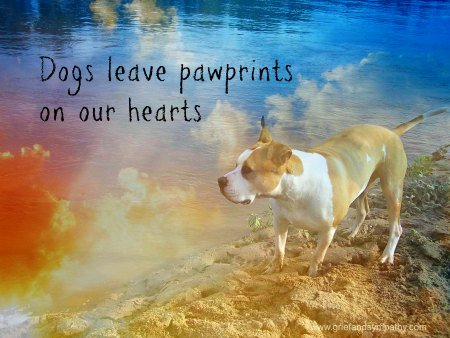 Dog Sympathy Card - Dogs leave pawprints on our hearts