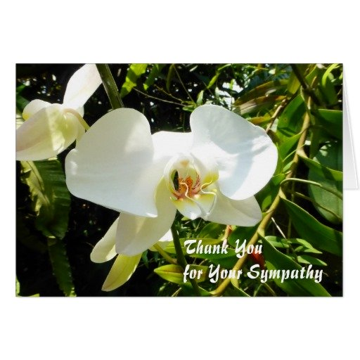 Thank you for your sympathy card - with white orchid