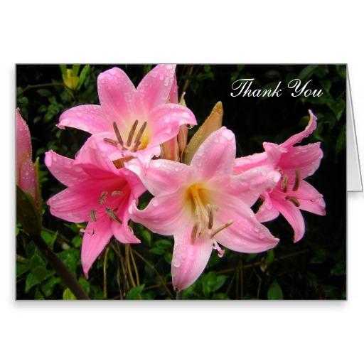 Thank You Card with Pink Lilies