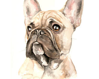 Custom Pug Portrait from Photo