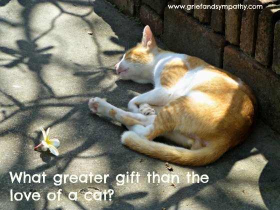 Cat Greetings Card with Quote - What greater gift than the love of a cat?